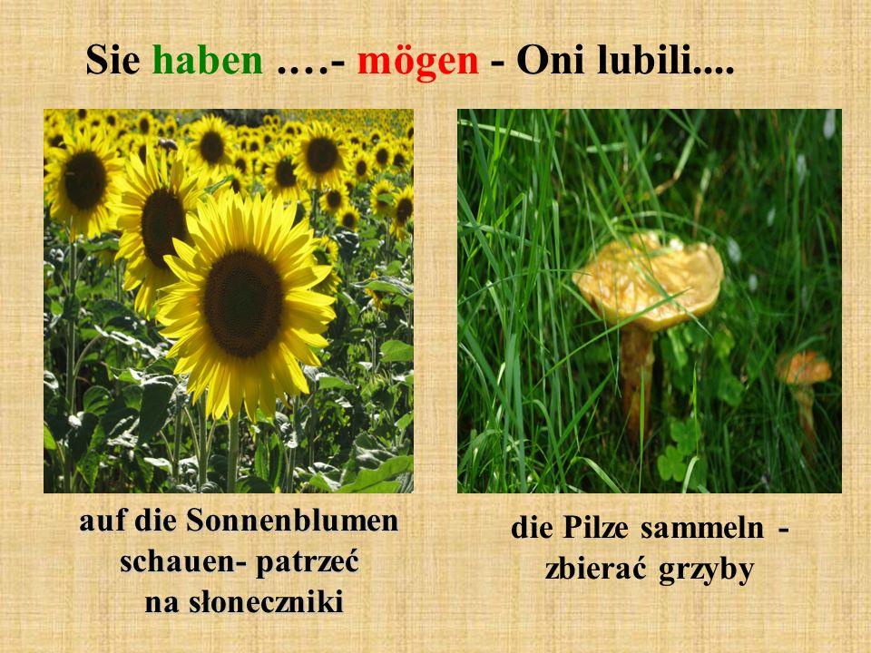 Sie haben.…- mögen - Oni lubili.... auf die Sonnenblumen schauen- patrzeć na słoneczniki die Pilze sammeln - zbierać grzyby