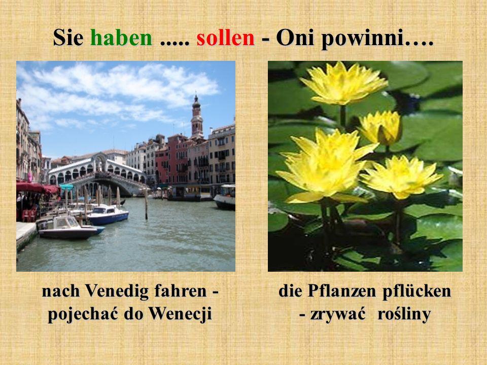 Sie haben..... sollen - Oni powinni…. nach Venedig fahren - pojechać do Wenecji die Pflanzen pflücken - zrywać rośliny