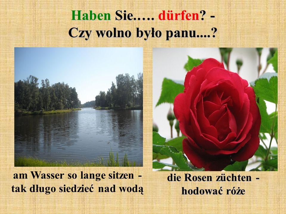 Haben Sie.…. dürfen? - Czy wolno było panu....? am Wasser so lange sitzen - tak długo siedzieć nad wodą die Rosen züchten - hodować róże