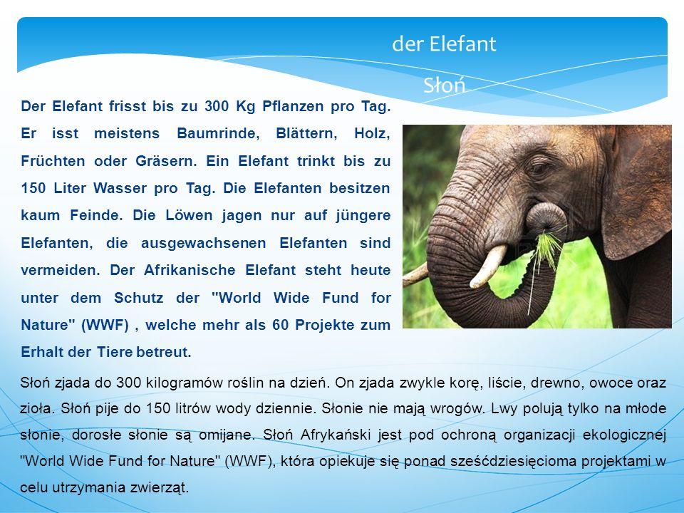 Der Elefant frisst bis zu 300 Kg Pflanzen pro Tag. Er isst meistens Baumrinde, Blättern, Holz, Früchten oder Gräsern. Ein Elefant trinkt bis zu 150 Li