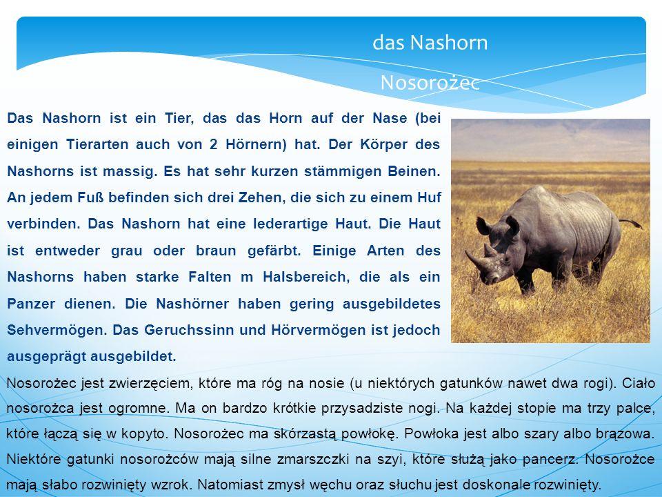 Das Nashorn ist ein Tier, das das Horn auf der Nase (bei einigen Tierarten auch von 2 Hörnern) hat.