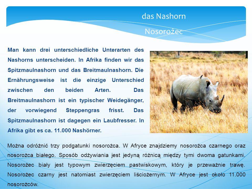 Man kann drei unterschiedliche Unterarten des Nashorns unterscheiden. In Afrika finden wir das Spitzmaulnashorn und das Breitmaulnashorn. Die Ernährun