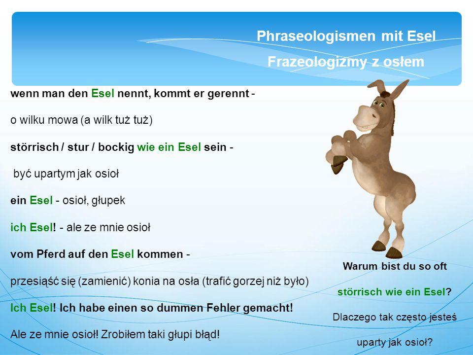 wenn man den Esel nennt, kommt er gerennt - o wilku mowa (a wilk tuż tuż) störrisch / stur / bockig wie ein Esel sein - być upartym jak osioł ein Esel - osioł, głupek ich Esel.