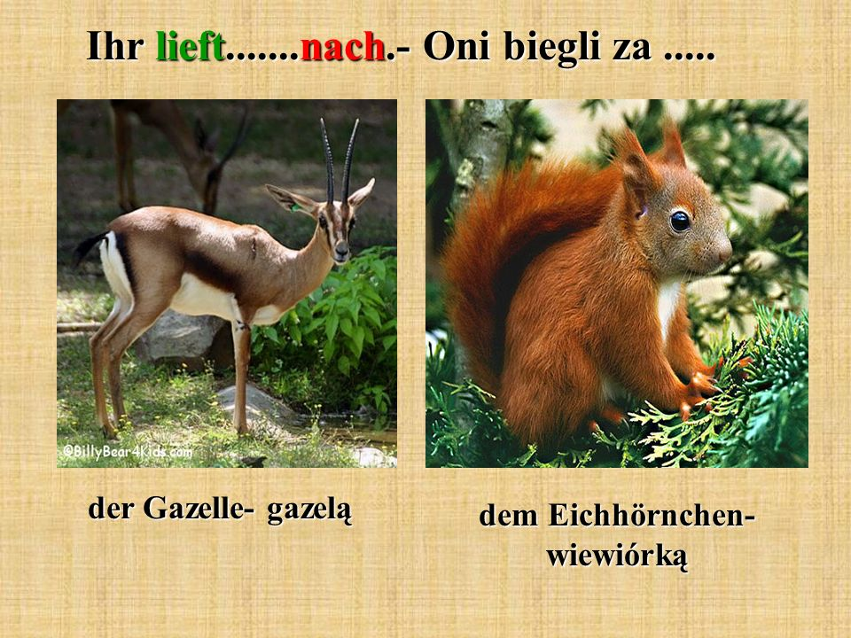 Ihr lieft.......nach.- Oni biegli za..... der Gazelle- gazelą dem Eichhörnchen- wiewiórką