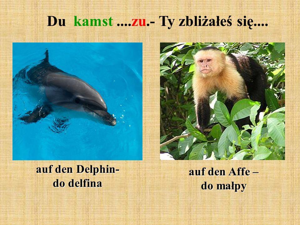 Du kamst....zu.- Ty zbliżałeś się.... auf den Delphin- do delfina auf den Affe – do małpy