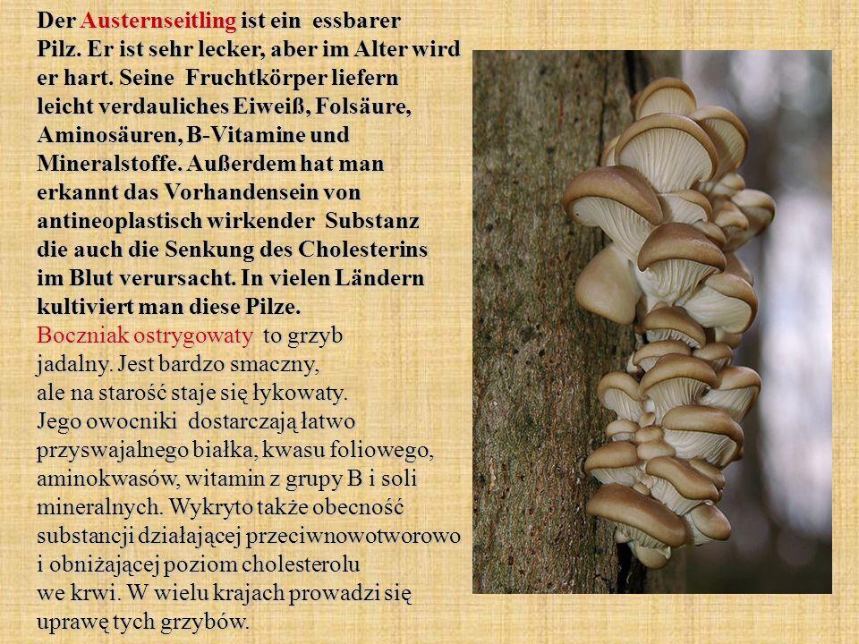 Der Austernseitling ist ein essbarer Pilz. Er ist sehr lecker, aber im Alter wird er hart. Seine Fruchtkörper liefern leicht verdauliches Eiweiß, Fols