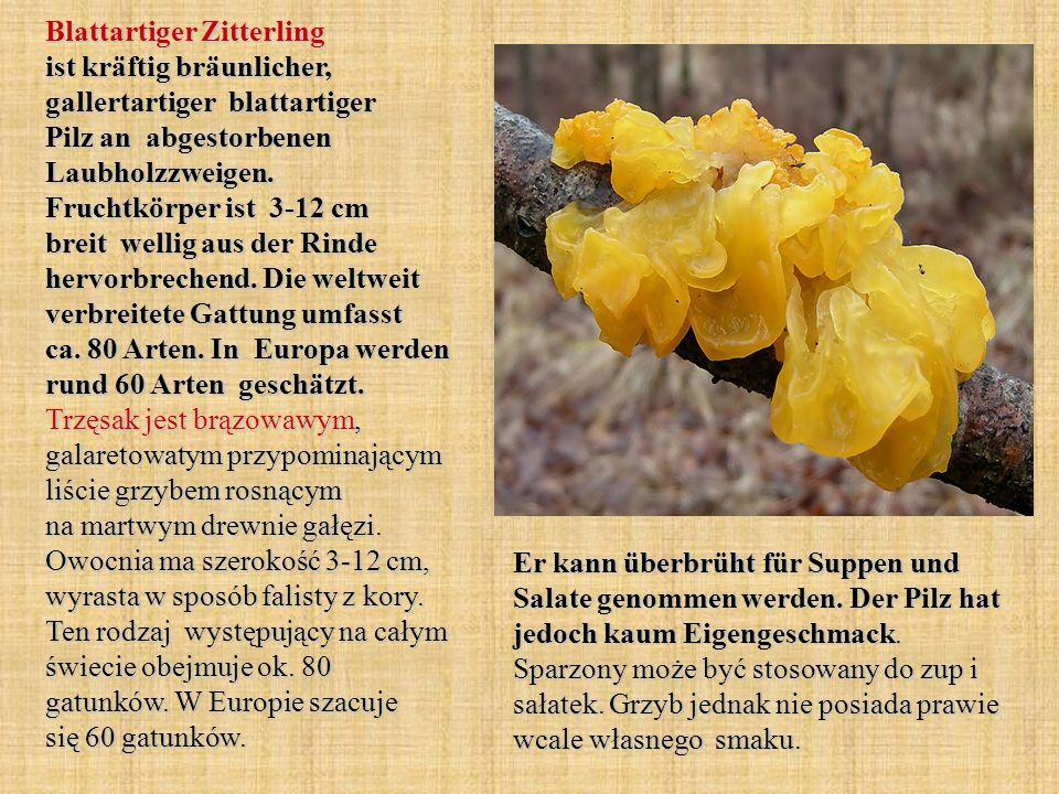 Blattartiger Zitterling ist kräftig bräunlicher, gallertartiger blattartiger Pilz an abgestorbenen Laubholzzweigen. Fruchtkörper ist 3-12 cm breit wel