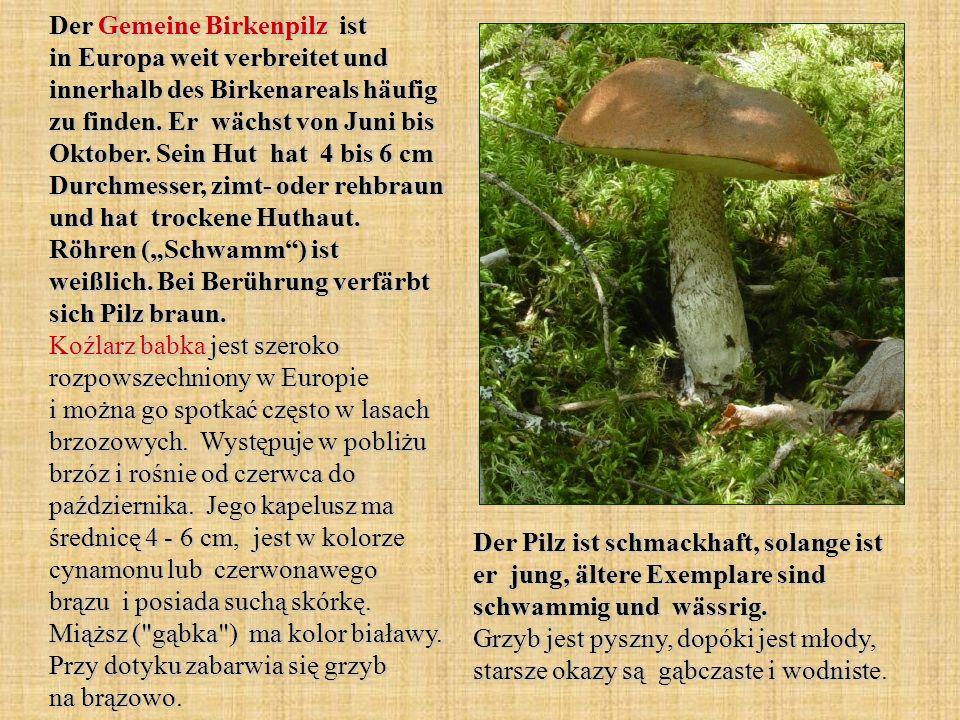 Der Gemeine Birkenpilz ist in Europa weit verbreitet und innerhalb des Birkenareals häufig zu finden. Er wächst von Juni bis Oktober. Sein Hut hat 4 b