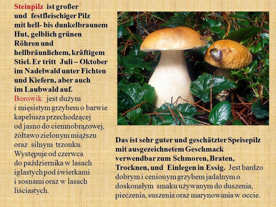 Steinpilz ist großer und festfleischiger Pilz mit hell- bis dunkelbraunem Hut, gelblich grünen Röhren und hellbräunlichem, kräftigem Stiel. Er tritt J