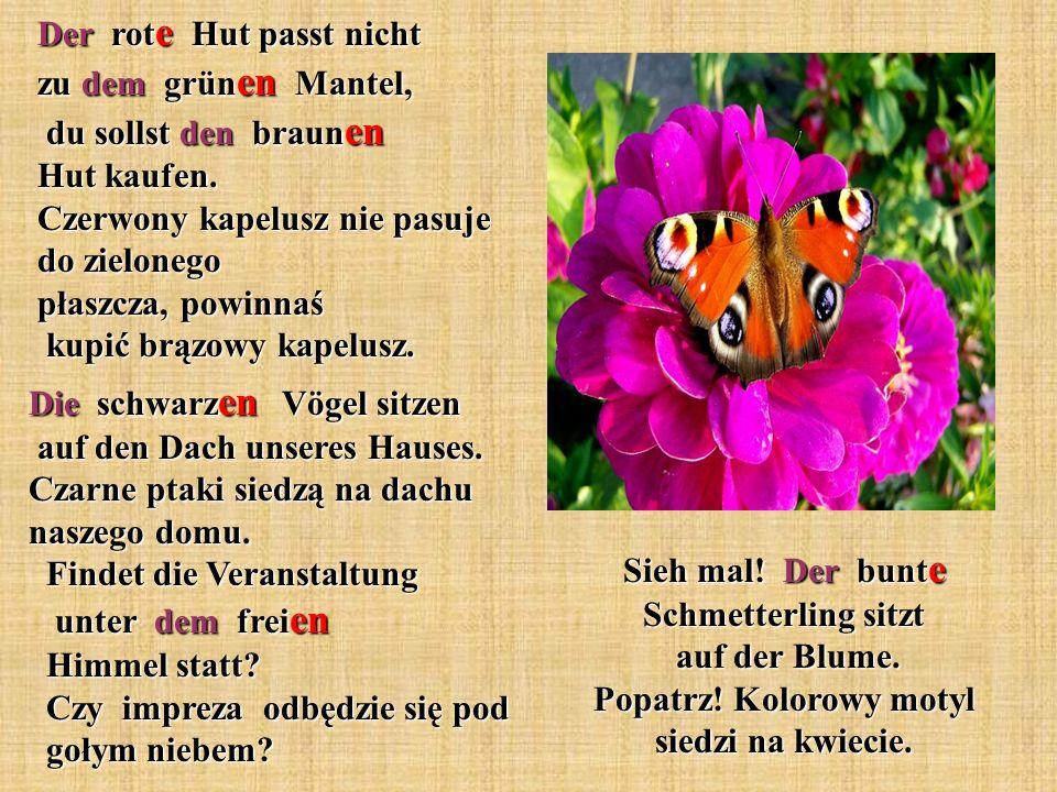 Sieh mal! Der bunt e Schmetterling sitzt auf der Blume. Popatrz! Kolorowy motyl siedzi na kwiecie. Der rot e Hut passt nicht zu dem grün en Mantel, du