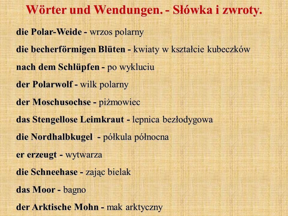 Wörter und Wendungen. - Słówka i zwroty. die Polar-Weide - wrzos polarny die becherförmigen Blüten - kwiaty w kształcie kubeczków nach dem Schlüpfen -