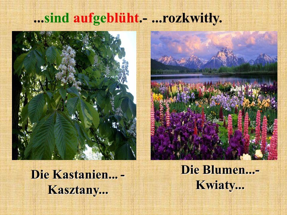 ...sind aufgeblüht.-...rozkwitły. Die Kastanien... - Kasztany... Die Blumen...- Kwiaty...