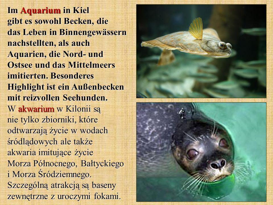 Im Aquarium in Kiel gibt es sowohl Becken, die das Leben in Binnengewässern nachstellten, als auch Aquarien, die Nord- und Ostsee und das Mittelmeers imitierten.