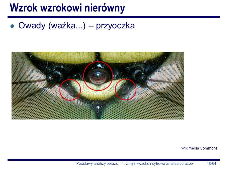 10/64Podstawy analizy obrazu. 1. Zmysł wzroku i cyfrowa analiza obrazów Wzrok wzrokowi nierówny l Owady (ważka...) – przyoczka Wikimedia Commons