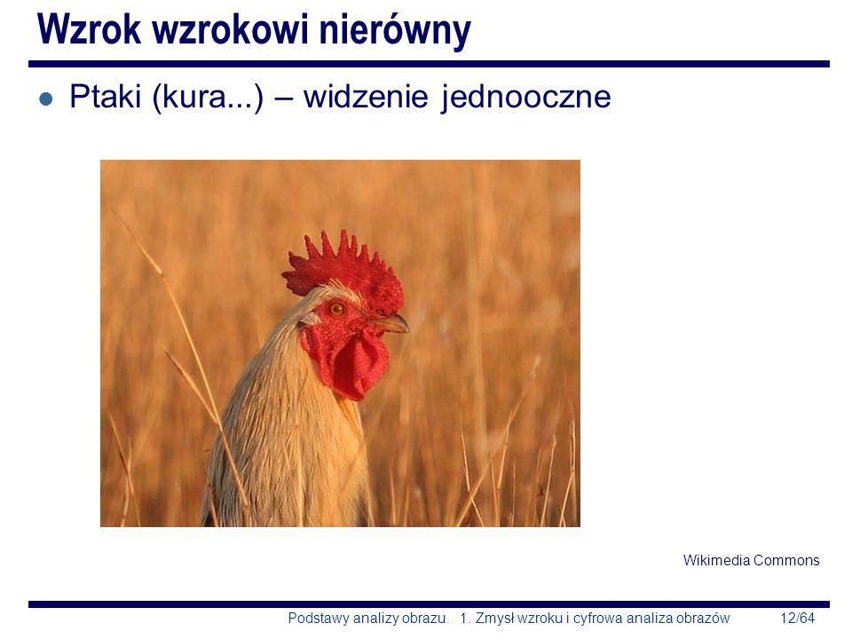 12/64Podstawy analizy obrazu. 1. Zmysł wzroku i cyfrowa analiza obrazów Wzrok wzrokowi nierówny l Ptaki (kura...) – widzenie jednooczne Wikimedia Comm