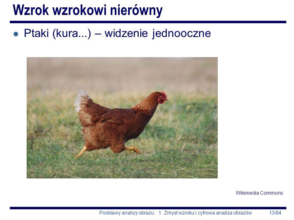 13/64Podstawy analizy obrazu. 1. Zmysł wzroku i cyfrowa analiza obrazów Wzrok wzrokowi nierówny l Ptaki (kura...) – widzenie jednooczne Wikimedia Comm
