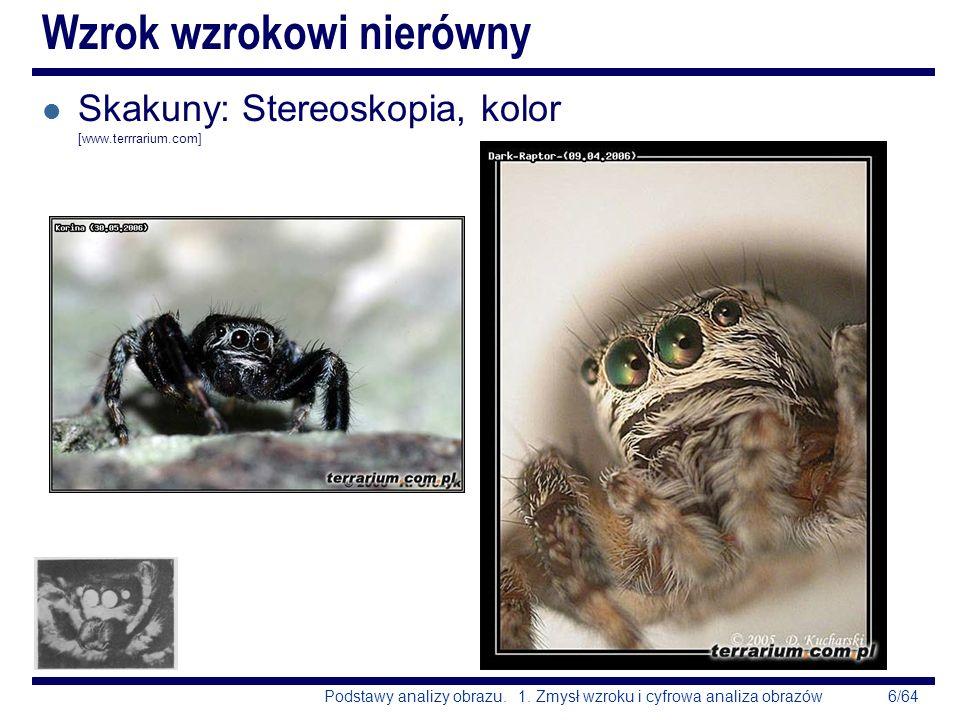6/64Podstawy analizy obrazu. 1. Zmysł wzroku i cyfrowa analiza obrazów Wzrok wzrokowi nierówny l Skakuny: Stereoskopia, kolor [www.terrrarium.com]