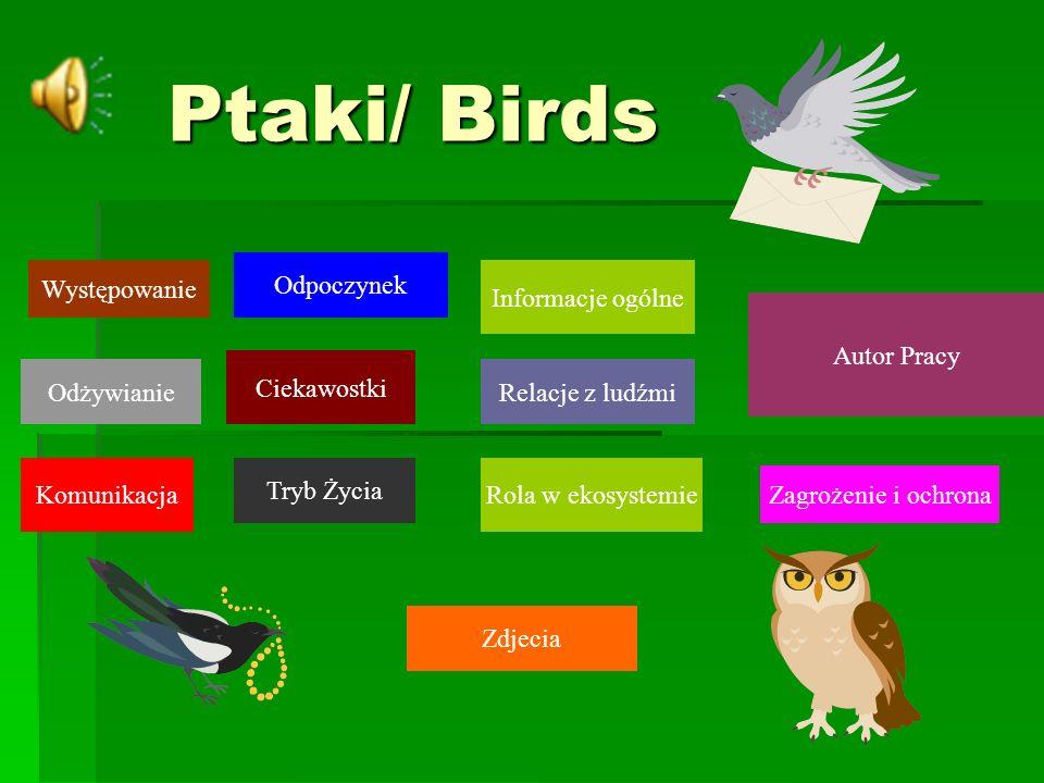 Ptaki/ Birds Informacje ogólne Występowanie Ciekawostki Tryb Życia Odżywianie Komunikacja Odpoczynek Rola w ekosystemie Relacje z ludźmi Zagrożenie i ochrona Zdjecia Autor Pracy