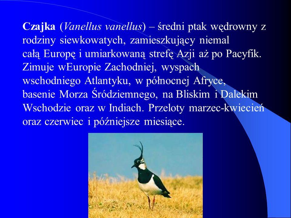 Czajka (Vanellus vanellus) – średni ptak wędrowny z rodziny siewkowatych, zamieszkujący niemal całą Europę i umiarkowaną strefę Azji aż po Pacyfik. Zi