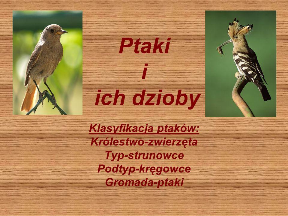 Ptaki i ich dzioby Klasyfikacja ptaków: Królestwo-zwierzęta Typ-strunowce Podtyp-kręgowce Gromada-ptaki