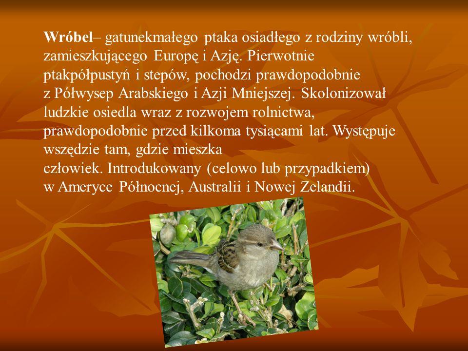 Wróbel– gatunekmałego ptaka osiadłego z rodziny wróbli, zamieszkującego Europę i Azję. Pierwotnie ptakpółpustyń i stepów, pochodzi prawdopodobnie z Pó