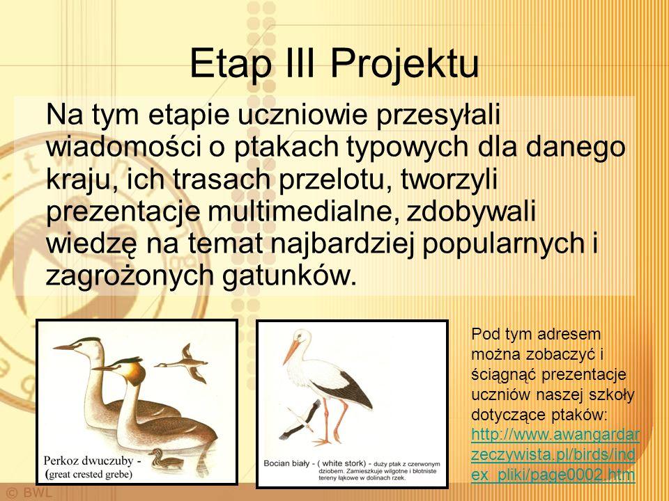 Etap III Projektu Na tym etapie uczniowie przesyłali wiadomości o ptakach typowych dla danego kraju, ich trasach przelotu, tworzyli prezentacje multimedialne, zdobywali wiedzę na temat najbardziej popularnych i zagrożonych gatunków.