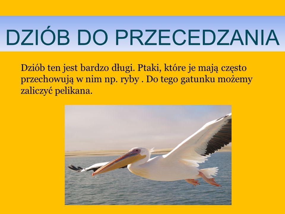DZIÓB DO PRZECEDZANIA Dziób ten jest bardzo długi. Ptaki, które je mają często przechowują w nim np. ryby. Do tego gatunku możemy zaliczyć pelikana.