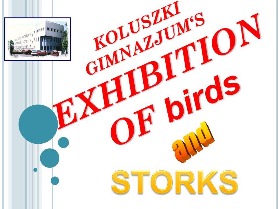 Stork – Bocian, Mateusz Jaśkiewicz