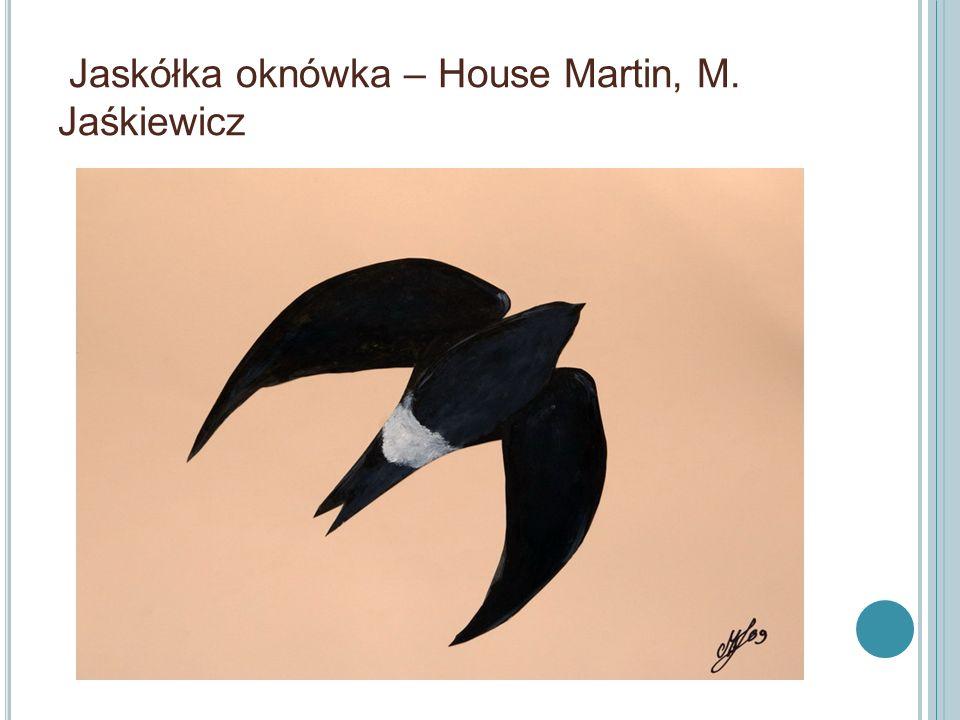 Jaskółka oknówka – House Martin, M. Jaśkiewicz