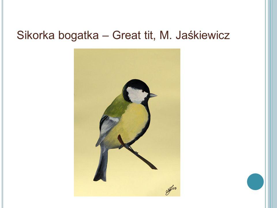Sikorka bogatka – Great tit, M. Jaśkiewicz