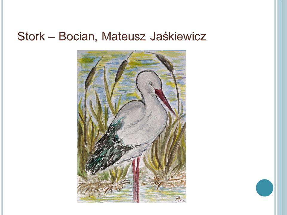 Zimorodek – Kindfisher, M. Jaśkiewicz