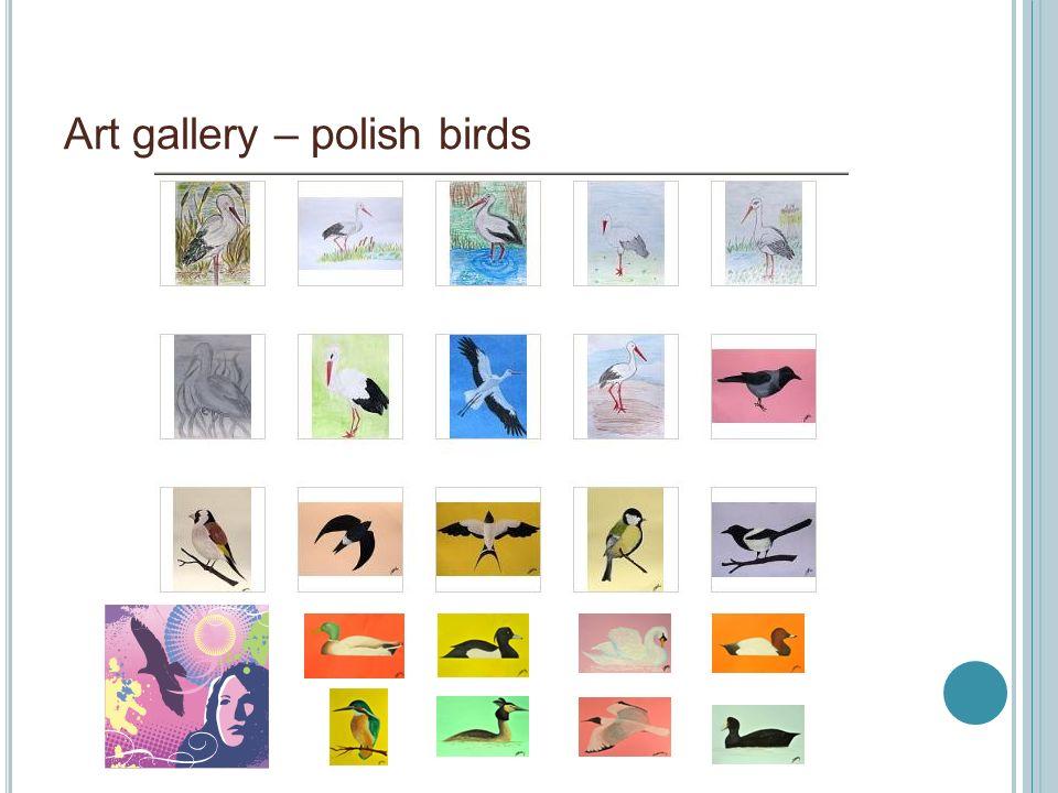 Art gallery – polish birds