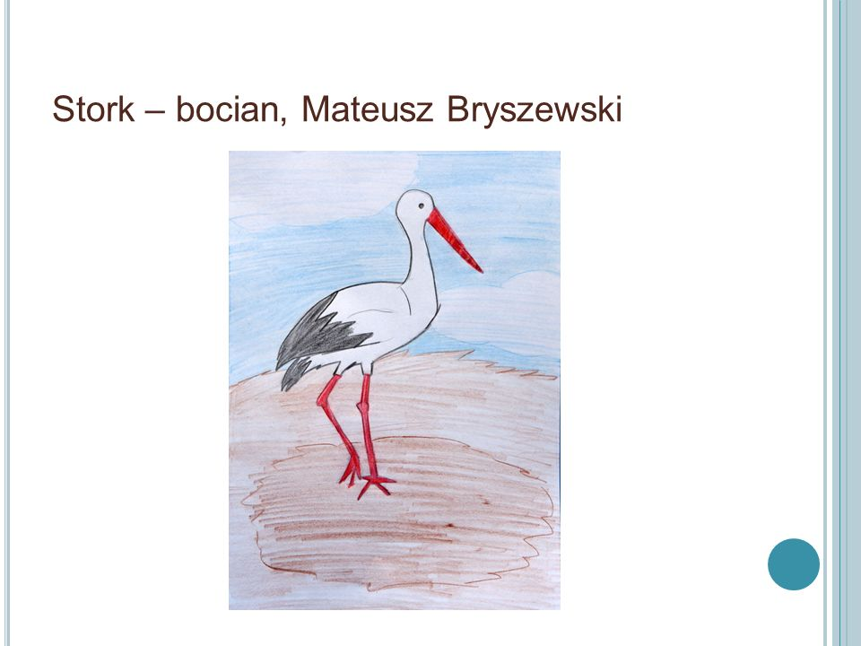 Łabędź – Swan, M. Jaśkiewicz