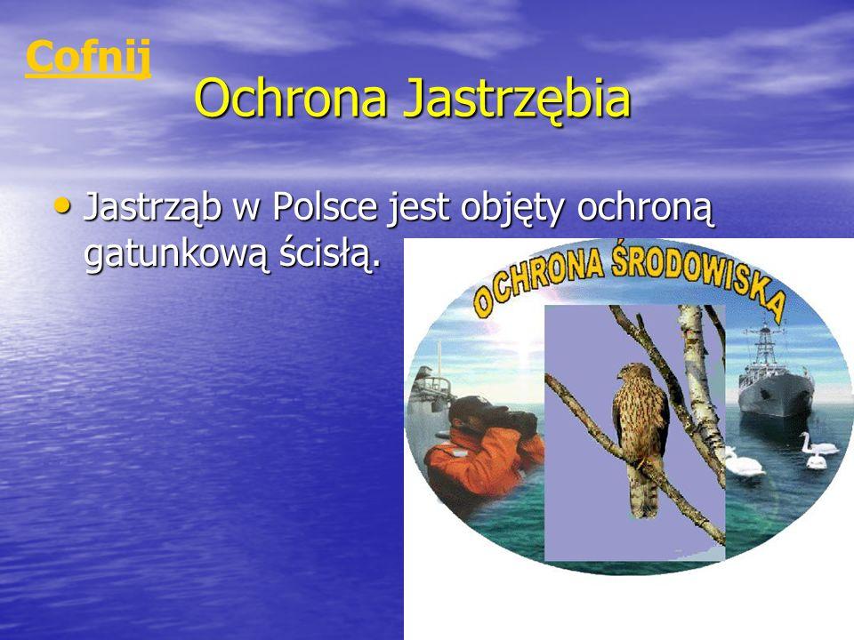 Ochrona Jastrzębia Jastrząb w Polsce jest objęty ochroną gatunkową ścisłą. Jastrząb w Polsce jest objęty ochroną gatunkową ścisłą. Cofnij