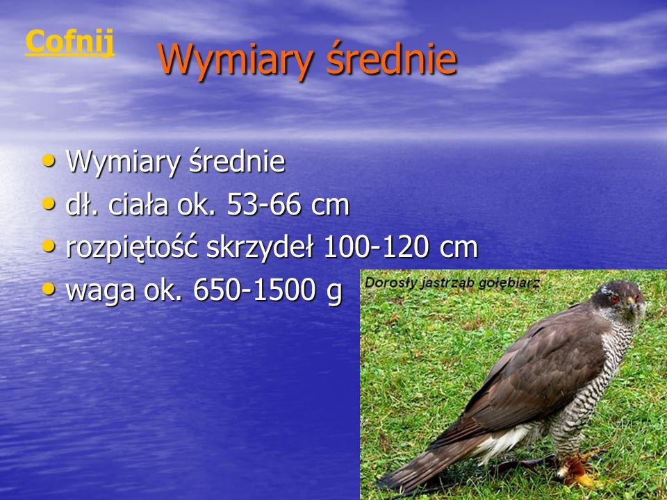 Wymiary średnie Wymiary średnie Wymiary średnie dł. ciała ok. 53-66 cm dł. ciała ok. 53-66 cm rozpiętość skrzydeł 100-120 cm rozpiętość skrzydeł 100-1