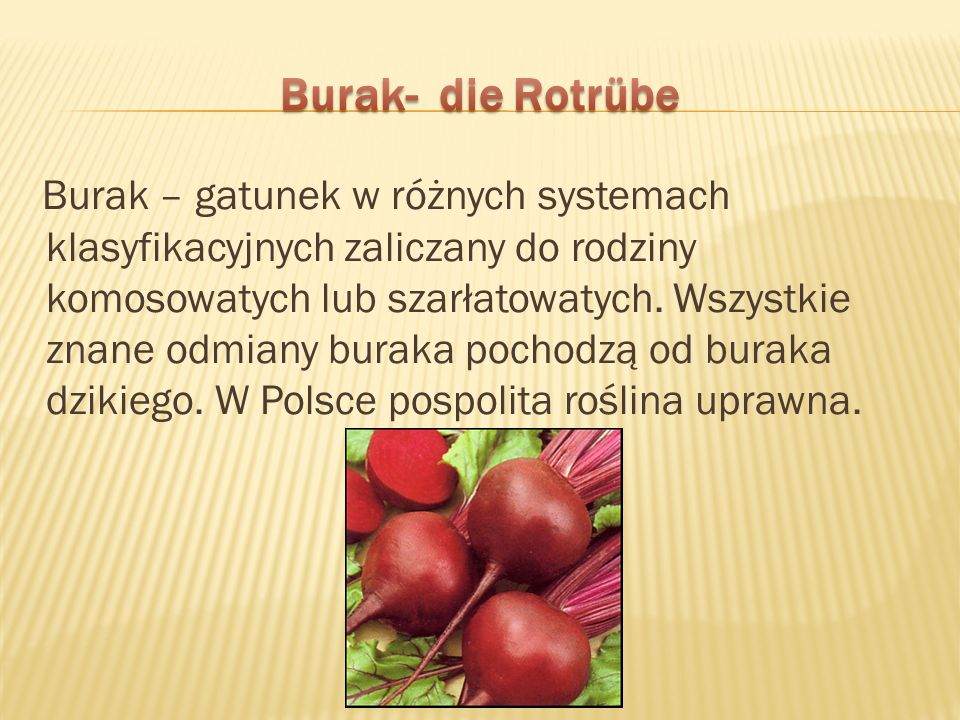 Burak – gatunek w różnych systemach klasyfikacyjnych zaliczany do rodziny komosowatych lub szarłatowatych. Wszystkie znane odmiany buraka pochodzą od