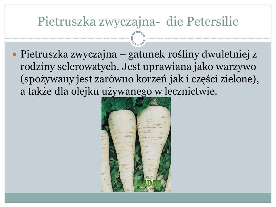 Pietruszka zwyczajna- die Petersilie Pietruszka zwyczajna – gatunek rośliny dwuletniej z rodziny selerowatych. Jest uprawiana jako warzywo (spożywany