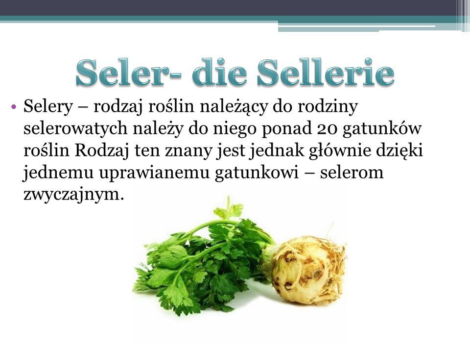 Selery – rodzaj roślin należący do rodziny selerowatych należy do niego ponad 20 gatunków roślin Rodzaj ten znany jest jednak głównie dzięki jednemu u