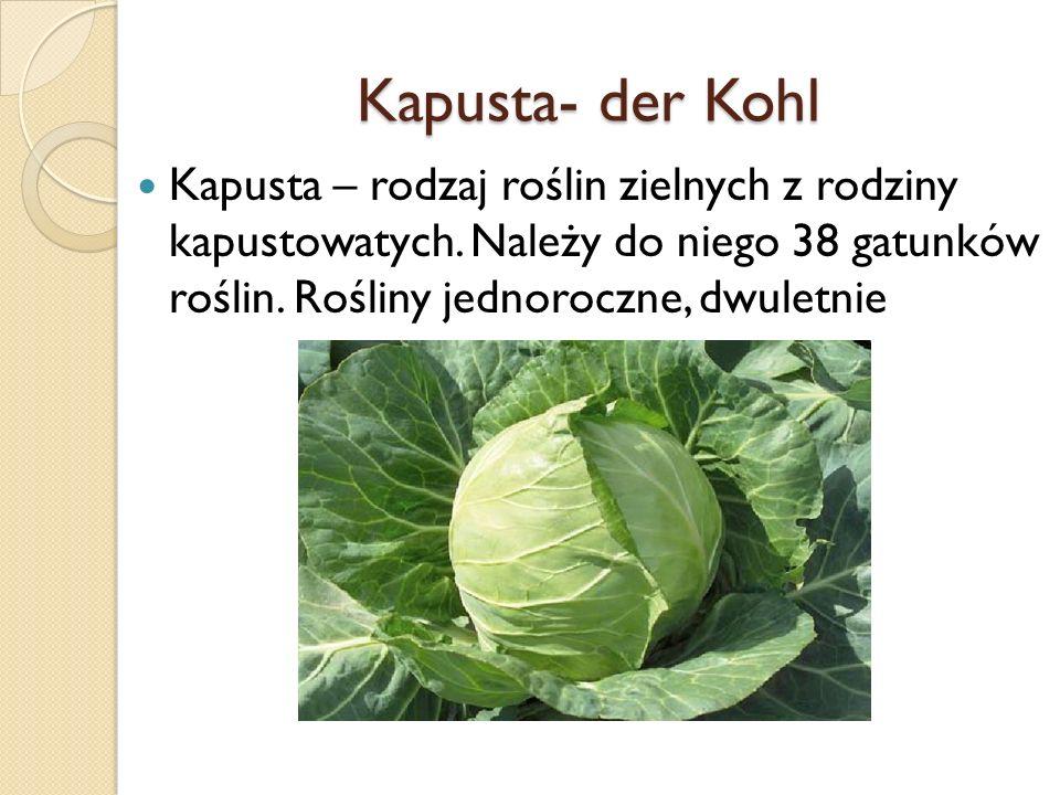 Kapusta- der Kohl Kapusta – rodzaj roślin zielnych z rodziny kapustowatych. Należy do niego 38 gatunków roślin. Rośliny jednoroczne, dwuletnie