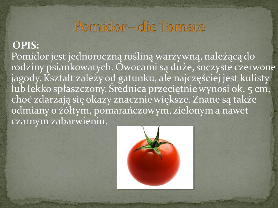 OPIS: Pomidor jest jednoroczną rośliną warzywną, należącą do rodziny psiankowatych. Owocami są duże, soczyste czerwone jagody. Kształt zależy od gatun