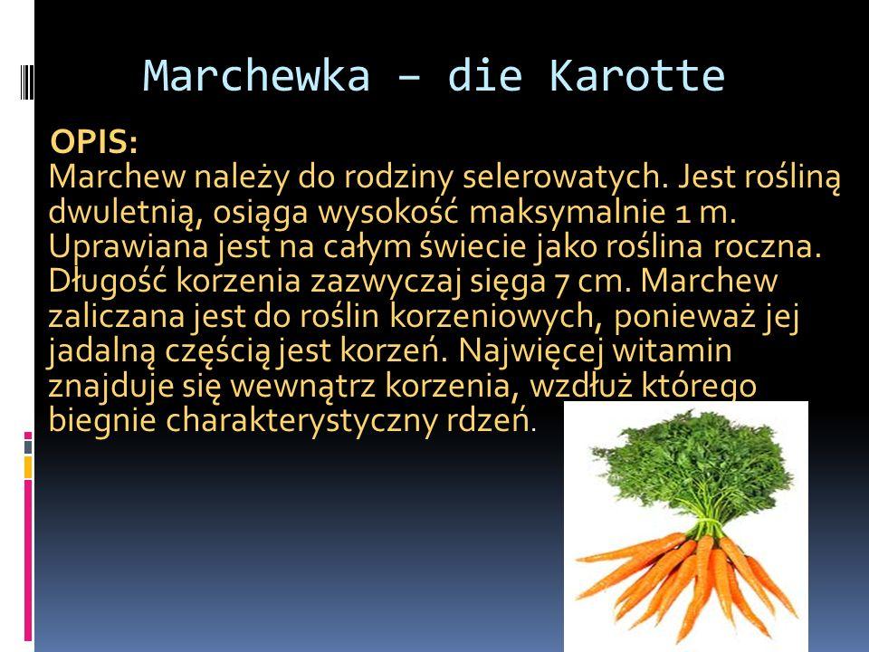 Marchewka – die Karotte OPIS: Marchew należy do rodziny selerowatych. Jest rośliną dwuletnią, osiąga wysokość maksymalnie 1 m. Uprawiana jest na całym