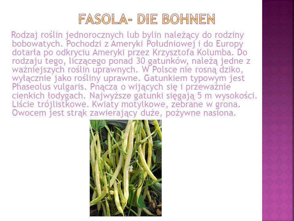 Rodzaj roślin jednorocznych lub bylin należący do rodziny bobowatych. Pochodzi z Ameryki Południowej i do Europy dotarła po odkryciu Ameryki przez Krz