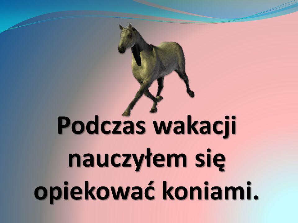 Podczas wakacji nauczyłem się opiekować koniami.