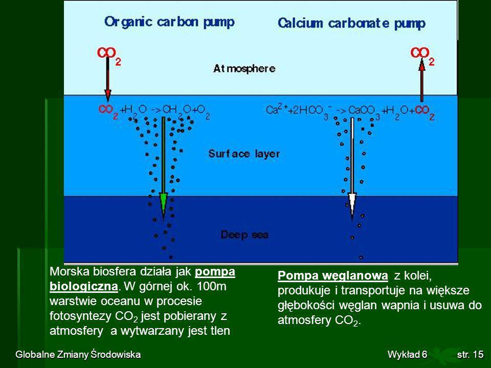 Globalne Zmiany Środowiska Wykład 6str. 15 Morska biosfera działa jak pompa biologiczna. W górnej ok. 100m warstwie oceanu w procesie fotosyntezy CO 2