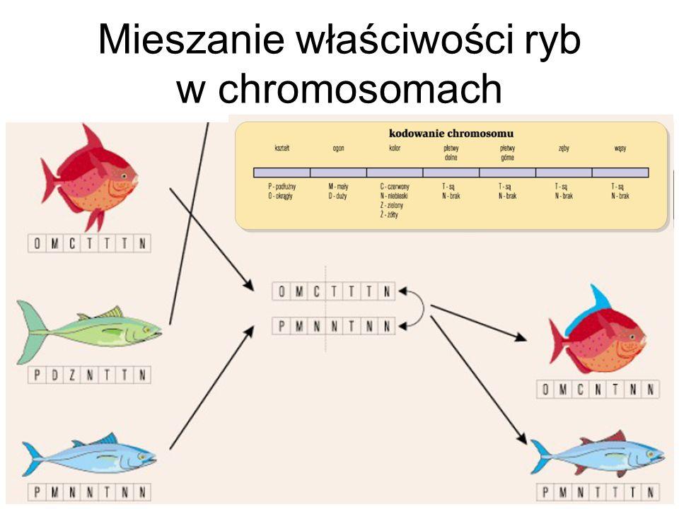Mieszanie właściwości ryb w chromosomach