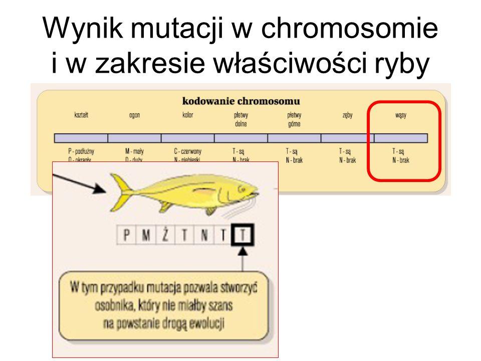 Wynik mutacji w chromosomie i w zakresie właściwości ryby