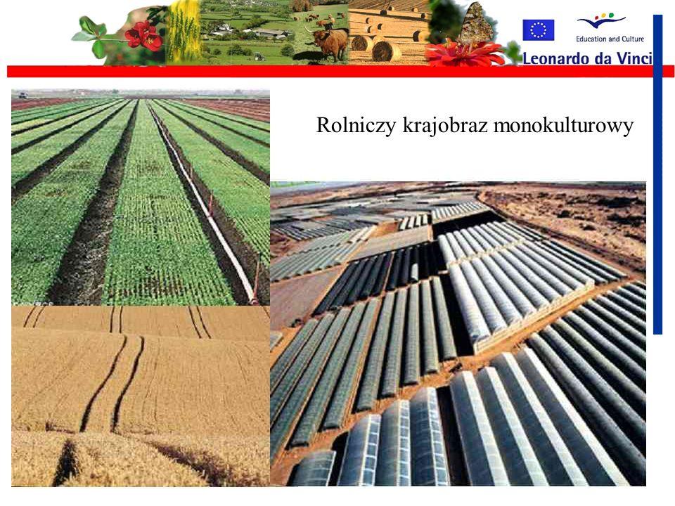 Monokultury Monokultura - system rolniczy polegający na wieloletnim uprawianiu na tym samym obszarze roślin jednego gatunku, roślin pokarmowych np. zb