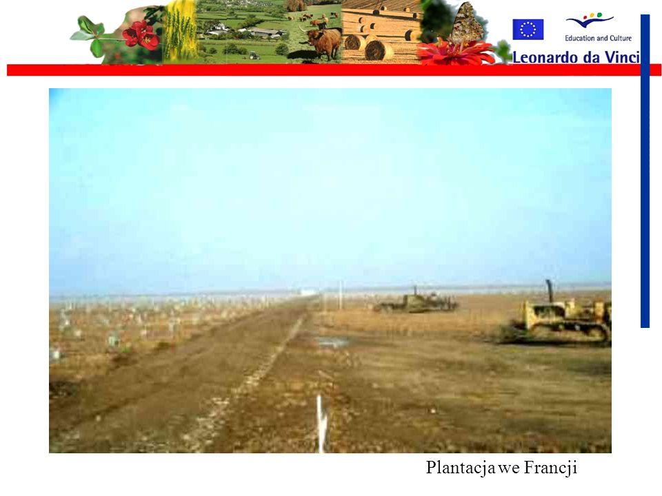 Ciężki sprzęt rolniczy Potężne uprawy to potężne maszyny Wady: Zmiana, niszczenie struktury gleby poprzez ugniatanie, Szybka degradacja gleby prowadzą