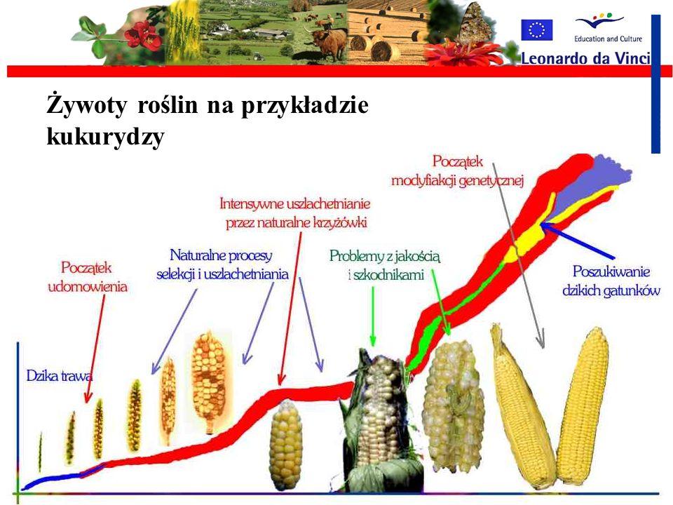 Intensyfikacja rolnictwa Ulepszanie gatunków Ulepszanie maszyn Nadmierna eksploatacja zasobów naturalnych Pogarszanie stanu środowiska