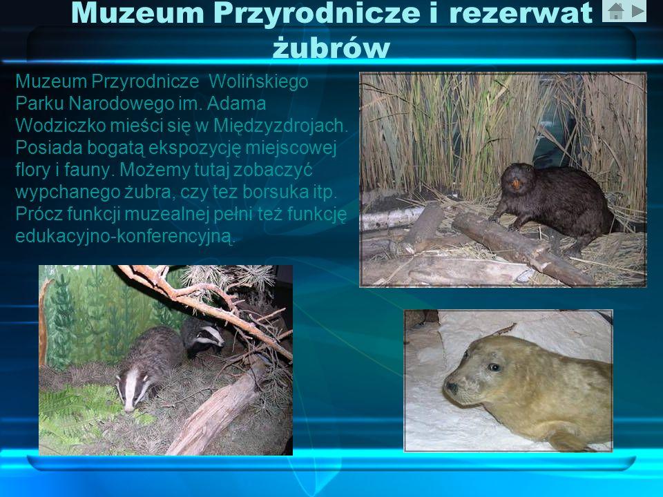 Muzeum Przyrodnicze i rezerwat żubrów Muzeum Przyrodnicze Wolińskiego Parku Narodowego im. Adama Wodziczko mieści się w Międzyzdrojach. Posiada bogatą